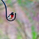 Rose Breasted Grosbeak - Male by Penny Rinker