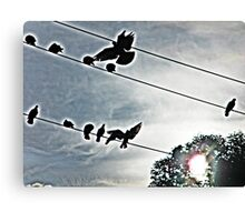 black birds on a wire Canvas Print