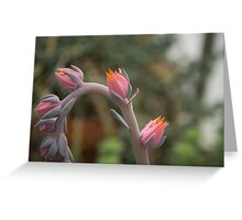 Sleeping Flowers Greeting Card