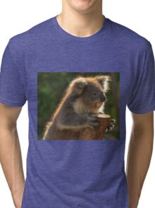 0252 Young Koala Tri-blend T-Shirt