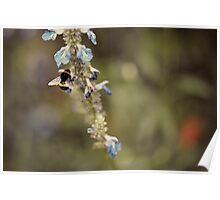 Summer Poem in Little Blue Flowers Poster