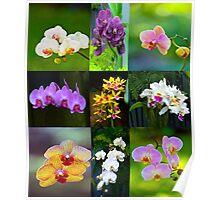 Elegant Orchids Poster