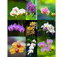 Elegant Orchids Photographic Print