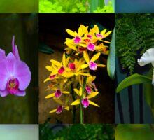 Elegant Orchids Sticker