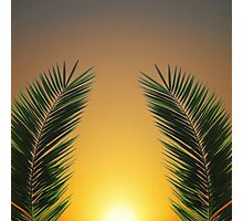 Palm Leaf Sunset Photographic Print