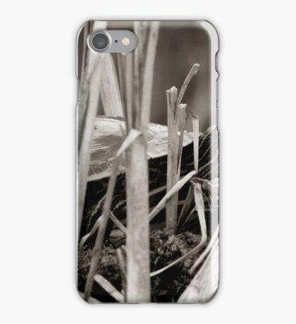 Painted Turtle Sunning Itself in Reeds iPhone Case/Skin