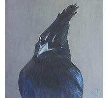 Bird Portrait - Steller's Jay Photographic Print