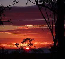 Winter Sunrise by debsphotos