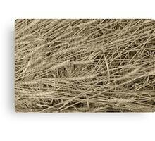 Rye Ready For Harvest Canvas Print