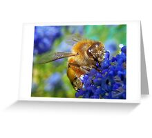 Bee on flower Greeting Card