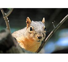 Squirrelly Photographic Print