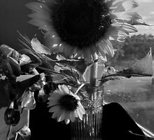 Afternoon Light on Sunflowers (black and white) by Sandra  Aguirre
