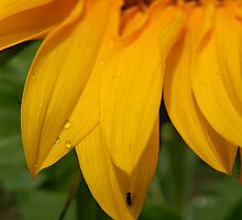 Bright and Sunny Petals by Sandra  Aguirre