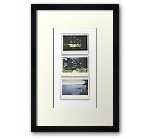 Cypress Transition  Framed Print