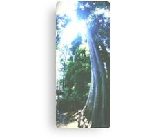 Grounded Cypress Canvas Print