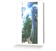 Grounded Cypress Greeting Card