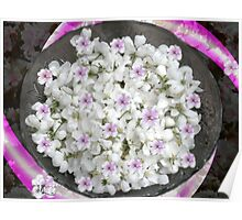 WHITE APPLE BLOSSOMS Poster