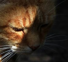 Close-up of ginger cat in shadow by turniptowers