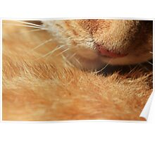 Close-up of ginger cat nose Poster