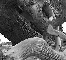 Populus B&W 002 by jasonksleung