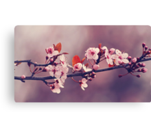 Soft side of Spring III Canvas Print