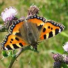 Small tortoiseshell by ienemien
