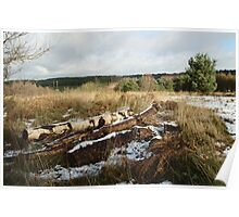 Winter Logs On Hednesford Hills Poster