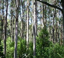 Forest of Eucalyptus Sticks by Guyzimijz