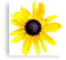 Daisy Brings Sunshine into your life Canvas Print