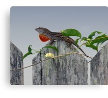 Anole on Fence Canvas Print