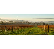 Morning View - Yarra Valley  Photographic Print