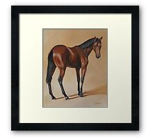 Tb Yearling, study Framed Print
