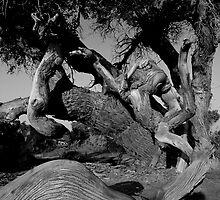 Populus B&W 005 by jasonksleung