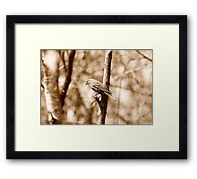 Female Red Winged Blackbird Perched on a Branch Framed Print