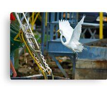 Great White Egret follows Shrimp Boat Canvas Print