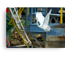Great White Egret follows Shrimp Boat Canvas Print