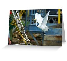 Great White Egret follows Shrimp Boat Greeting Card
