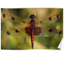 Calico Pennant #2  Poster