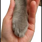 Cat Paw In Hand by amanda metalcat
