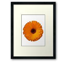Yellow daisy Framed Print