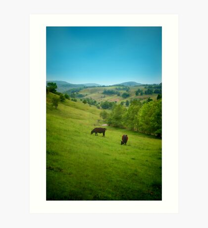 Cows in the Field Art Print