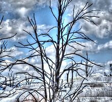Wicked Tree by Tori Snow