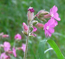 Elegant Wild Flower Case  by LiquidEmerald