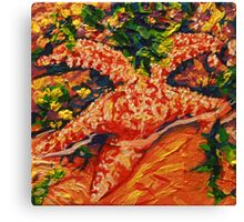 Starfish 1 Canvas Print
