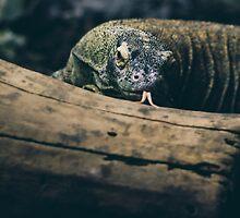 Komodo Dragon  by PatiDesigns