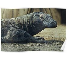 Komodo Dragon Portrait Poster