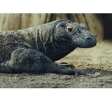 Komodo Dragon Portrait Photographic Print