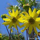 Flower Power in Florida by Ronee van Deemter