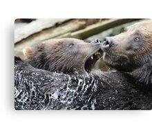 Grizzlis fighting Canvas Print