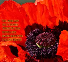 A Poppy for forgiveness by Carolyn Clark